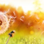 praktijk-zielscontact-luisterkind-levensbrug-overleden-coma-einde-afstemming-contact